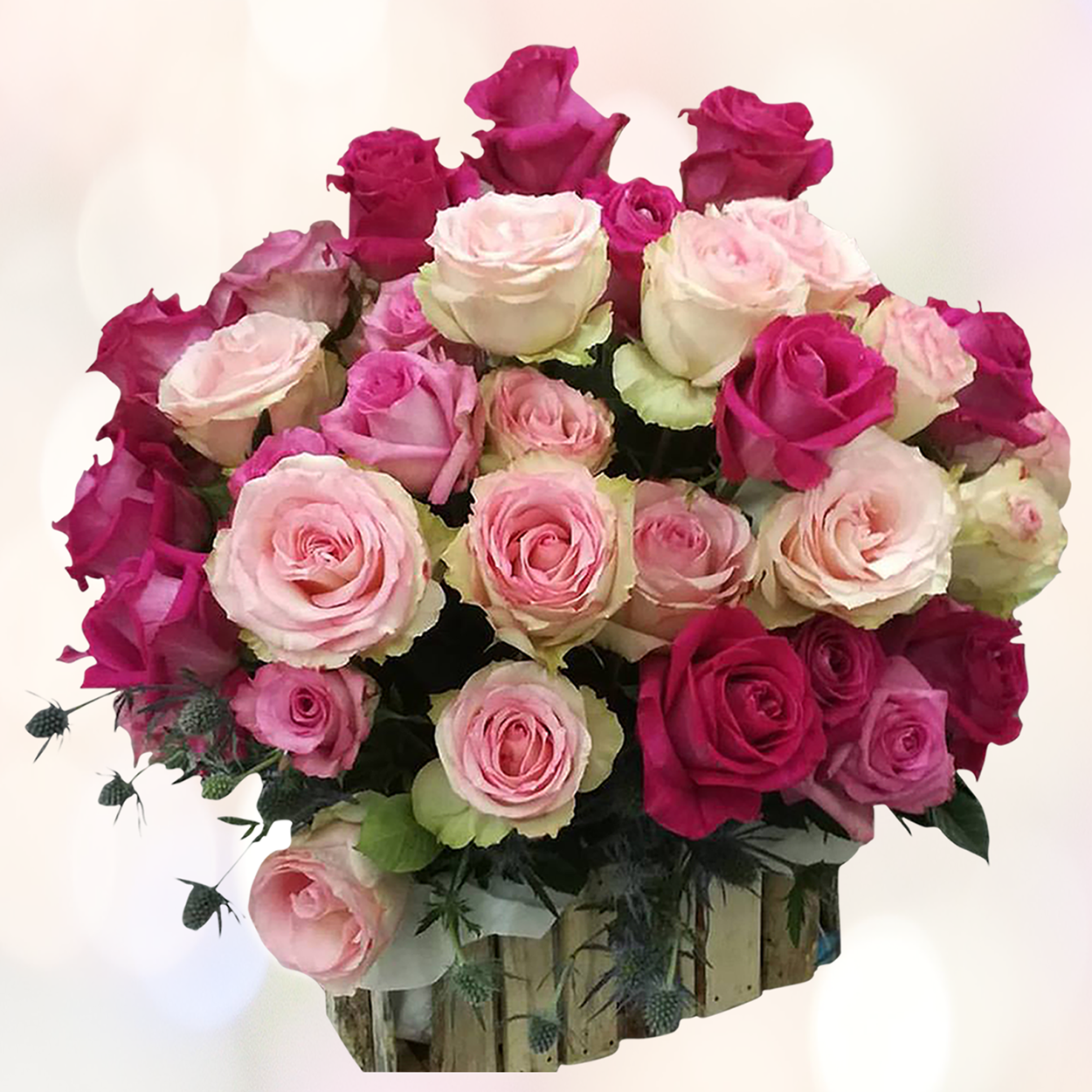 ecuadorian roses Real roses that last more than a year long onlyroses, the uk's finest specialist rose florist has created the infiniterose, real premium ecuadorian roses that have.